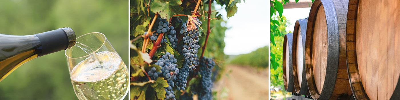 wine bottle grapes and barrels