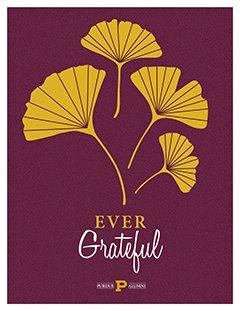 gingko grateful